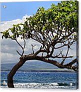 Waiehu Panarama Acrylic Print