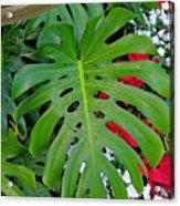 Waikiki Split Leaf Acrylic Print