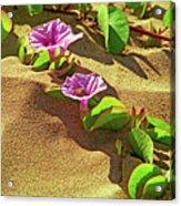 Wailea Beach Morning Glory With Honeybee Acrylic Print