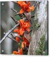 Waimea Flowers Acrylic Print