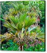 Waimea Palm Study 2 Acrylic Print