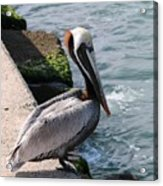 Waiting For A Fish - 2 Acrylic Print