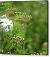 Waiting For Bloom Acrylic Print