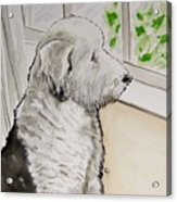 Waiting For Dad Acrylic Print