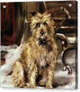 Waiting For Master   Acrylic Print by Jane Bennett Constable
