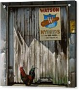Waiting For Watson Acrylic Print by Doug Strickland