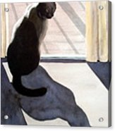 Waiting To Go Out Acrylic Print