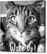 Wake Up It's Your Birthday Cat- Art By Linda Woods Acrylic Print