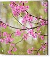Waking Blooms Acrylic Print