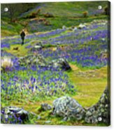 Walk Among The Bluebells Acrylic Print