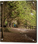Walk Among The Trees Acrylic Print