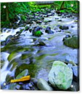 Walk Bridge Over Moffit Creek Acrylic Print
