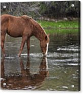 Walk Horse In Salt River Acrylic Print