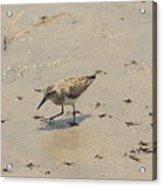 Walk Softly - Debbie May - Photosbydm Acrylic Print