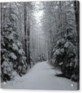 Walk With Frost Acrylic Print