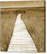 Walk With Me 1 Acrylic Print