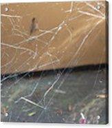Walkin In A Spider Web Acrylic Print