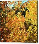 Walking Among The Aspens At Dillon Reservoir Acrylic Print