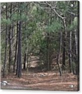 Walking In The Pine Forest Acrylic Print