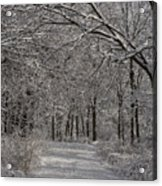 Walking In The Woods Acrylic Print