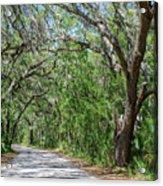 Walking In The Woods Of Amelia Island Acrylic Print
