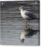 Walking On Water 4850 Acrylic Print