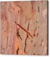 Walking Stick And Pheasant Feather Acrylic Print