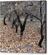 Walking Trees. Acrylic Print