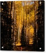 Walking With Aspens Acrylic Print