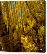 Walking With Autumn Acrylic Print