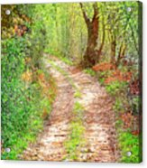 Walkway In Secluded Deciduous Forest Acrylic Print