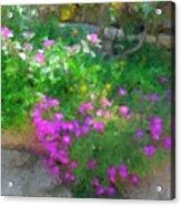 Wall Flowers, Croatia Acrylic Print