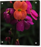Wallflower Beauties Acrylic Print