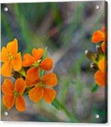 Wallflower Wildflower Acrylic Print