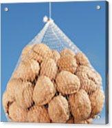 Walnuts Acrylic Print