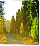 Wanaka Morning Light Acrylic Print