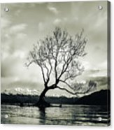Wanaka Tree - New Zealand  Acrylic Print