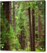 Wandering Acrylic Print