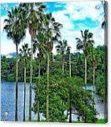 Waokele Pond Palms And Sky Acrylic Print