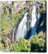 Waratah Falls Tasmania Acrylic Print