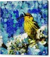 Warbler Of Spring Acrylic Print