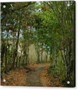 Wariman Pathway Acrylic Print
