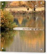 Warm Autumn River Acrylic Print