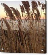 Warm Breeze Acrylic Print