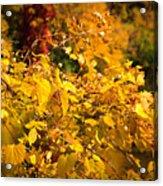 Warm Fall Colors Acrylic Print