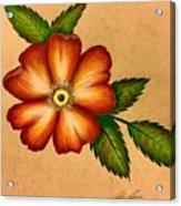Warm Flower Acrylic Print