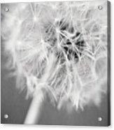 Warm Wishes II Acrylic Print