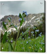 Wasatch Luster Acrylic Print
