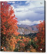 212m45-wasatch Mountains In Autumn  Acrylic Print