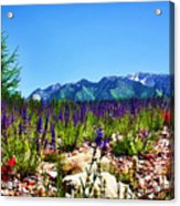Wasatch Mountains In Spring Acrylic Print by Tracie Kaska